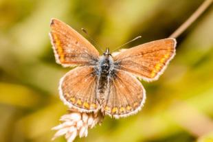 Leer in deze online cursus macrofotografie alles wat je moet weten om mooie detail foto's te maken