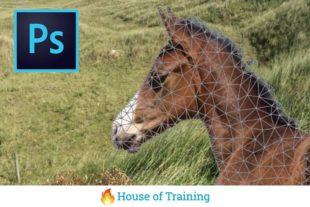 In deze online cursus leer je Selecteren en transformeren Photoshop