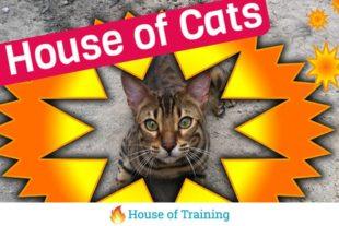 Leer werken met vectoren in deze online cursus Photoshop